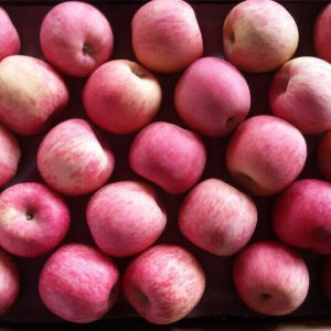 Supplying High Quality Sweet Red FUJI Apple pictures & photos
