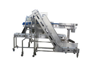 5-12 Grades Belt Weigher for Chicken Oyster Machine pictures & photos