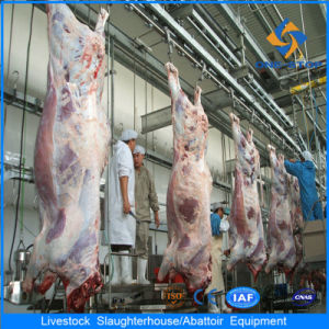 Halal Complete Cattle Slaughter Line House pictures & photos