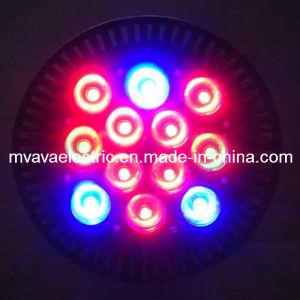 High Power PAR38 LED Grow Light (MG-P38-12RB)