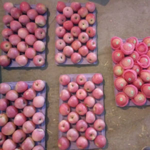 New Crop of Qinguan Apple Is Coming Soon pictures & photos