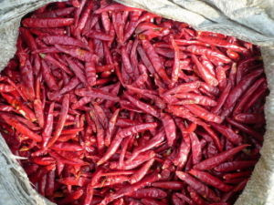 Red Chilli Red Chaotian Chilli in Grade a Quality