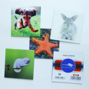 Free Design High Quality 3D Lenticular Fridge Magnet pictures & photos