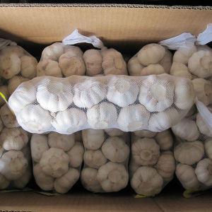 5.0cm Chinese Pure White Garlic of Small Package in Carton pictures & photos