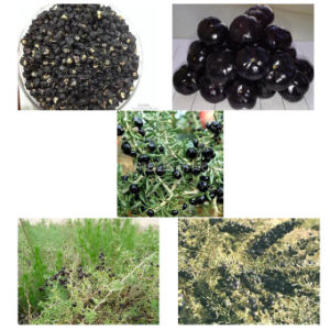 Medlar Organic Herbs Red Dried Black Gojiberry pictures & photos