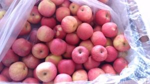 Fresh Exporting (FUJI, GALA, GOLDEN, QINGUAN) Apple pictures & photos