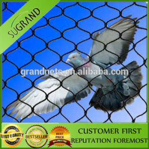 High Quality Anti Bird Netting 100% Virgin HDPE Anti Bird Net pictures & photos