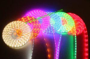 24V/12V SMD5050 LED Strip Light LED Strip pictures & photos