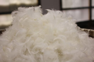100% 2-4 Cm White Goose Feather for Sofa and Topper and Pillow Filling pictures & photos
