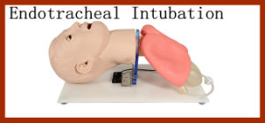 Advance Human Endotracheal Intubation Training Model pictures & photos