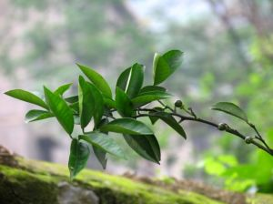 Natural Herbal Extract Naringin CAS 10236-47-2 98% HPLC Fruit Extract Naringin pictures & photos