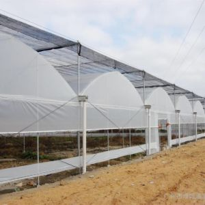 Multi-Span Gothic Film Greenhouse FM90f40 pictures & photos