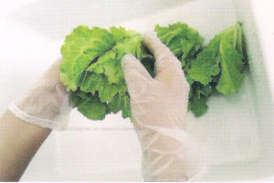 High End Disposable Gloves Powder Free Vinyl Gloves for Food Industry pictures & photos