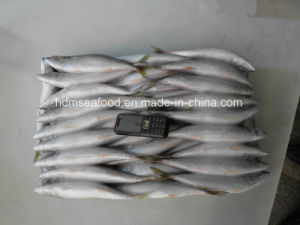 Whole Round Frozen Fish Pacific Mackerel for Bait pictures & photos