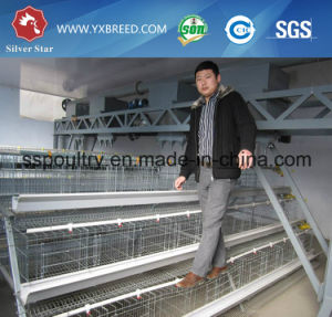 Sourth American Broiler and Layer Chicken Cages with Best Price pictures & photos