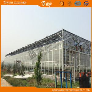 PC Sheet Greenhouse with Glass Surrounded pictures & photos