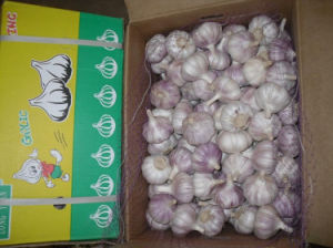 New Crop Fresh Red Garlic pictures & photos