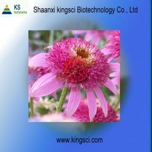 Echinacea Purpurea Extract (Cichoric Acid 4% HPLC) (KSSH0012+)