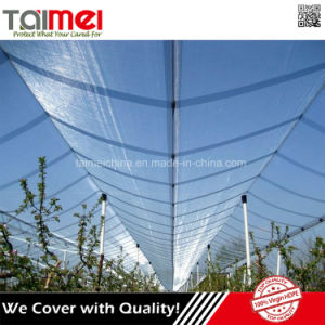 High-Density Polyethylene Agriculture Plastic Protection Apple Tree Shade Cloth Anti Hail Net pictures & photos