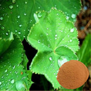 Lady′s Mantle Extract in Stocks (FH-C-071) pictures & photos