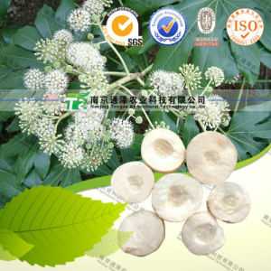 High Quality Herb Medicine Ricepaperplant Pith pictures & photos
