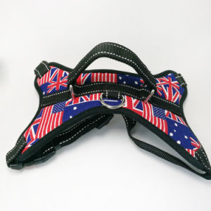 Harness Dog pictures & photos
