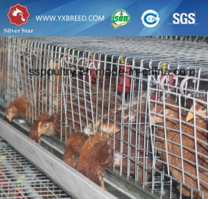 Galvanized Pullet Chicken Cage pictures & photos