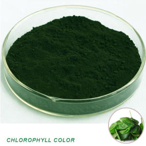 Natural Chlorophyll Color Sodium Copper Chlorophyllin pictures & photos