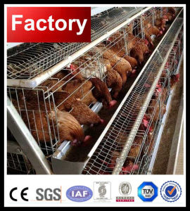 Automatic Equipment for Layer Farm pictures & photos