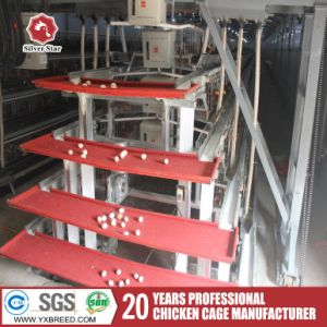 Silver Star Design a Type Automatic Layer Chicken Cage pictures & photos