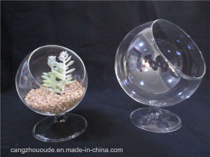 Plant Transparent Mini Household Decorative Glass Vase