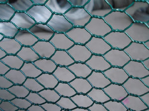 Hexagonal Wire Netting pictures & photos