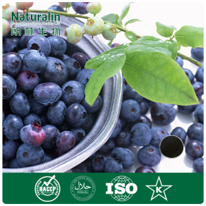 High Quality 100% Natural Bilberry Extract Powder