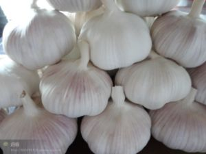 2015 New Crop High Quality Fresh Vegetables Garlic pictures & photos