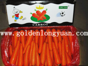 Fresh Carrot New Crop with Bright Red Color pictures & photos