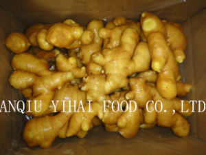 Good Quality Fresh Ginger for Middle East and South Asia