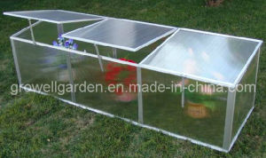 Cold Frame Greenhouse for Young Plants (C622) pictures & photos