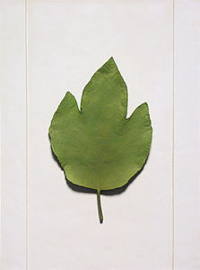 Wall-Mounted Resin Maple-Leaf-Sample for Home Decoration / Hotel Decoration