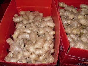 Fresh Ginger (150G and up) pictures & photos