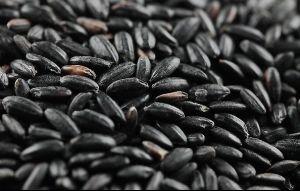 Black Rice Essence (3168)