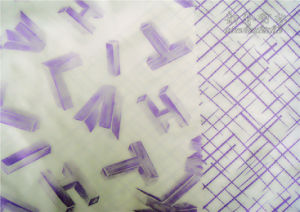 Nylon Taffeta Printing 380t Fabric pictures & photos