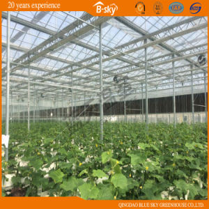 Glass Multi-Span Greenhouse pictures & photos