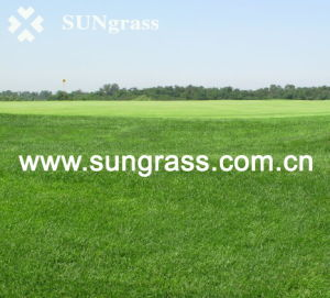 50mm Sports Football Artificial Grass (SUNJ-HY00012) pictures & photos
