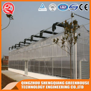 Multi-Span Steel Structure PC Sheet Greenhouse for Flower pictures & photos