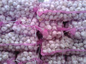 5cm Fresh Normal White Garlic pictures & photos