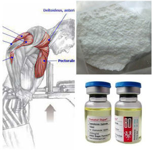 Wholesale Steroid Hormone Powder Testosterone Enanthate 400ml pictures & photos
