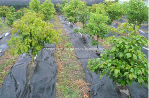 70G/M2, 75G/M2, 80G/M2/90G/M2 PP Woven Geotextile/Anti Weed Mat pictures & photos