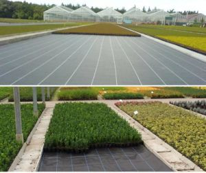 Supply Black and Green PP Woven Fabric/ Weedbarrier/ Weed Control/Environmentally Friendly Weedbarrier and Groundcover pictures & photos
