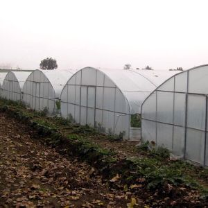 Agricultural Commercial Plastic Film Garden Greenhouse pictures & photos