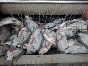 Large Type Fish Skin Peeler, Peeling Machine Mstp-1000 pictures & photos
